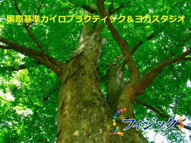 大木のように元気な背骨