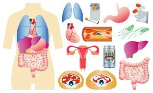 胃腸、呼吸器、内臓脂肪
