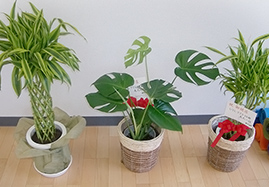 お祝いの観葉植物